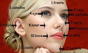 parti del viso in spagnolo